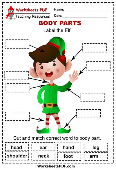 Label the Elf body parts