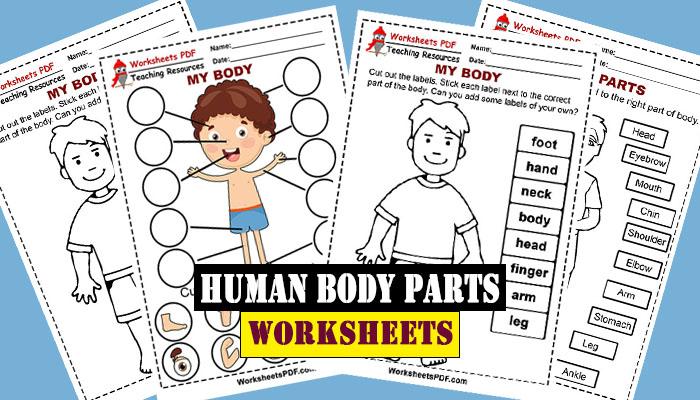 Human Body Parts - Free Printables - Worksheets PDF