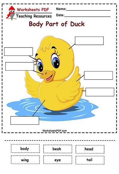Body Part of Duck