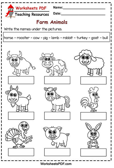 Write the names under the pictures
